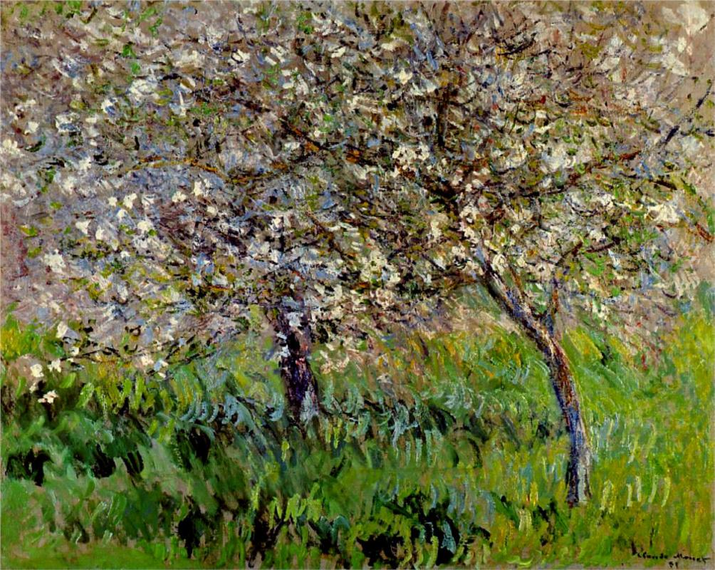 Apple Trees in Bloom at Giverny - Claude Monet Paintings